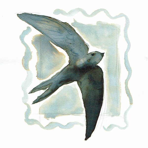 01 - Swift - Mauersegler
