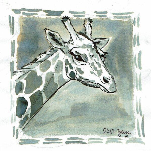05-long- Giraffe