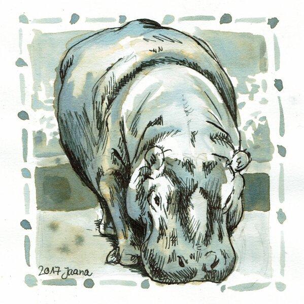 16-fat- Nilpferd