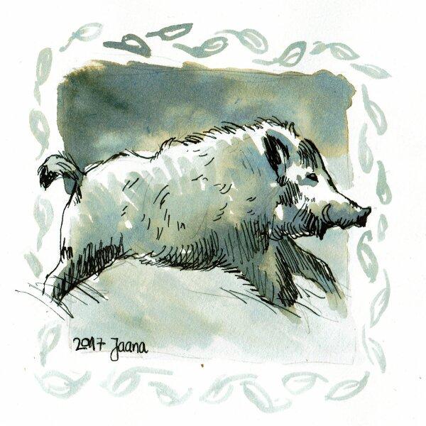 21-furious- Wildschwein