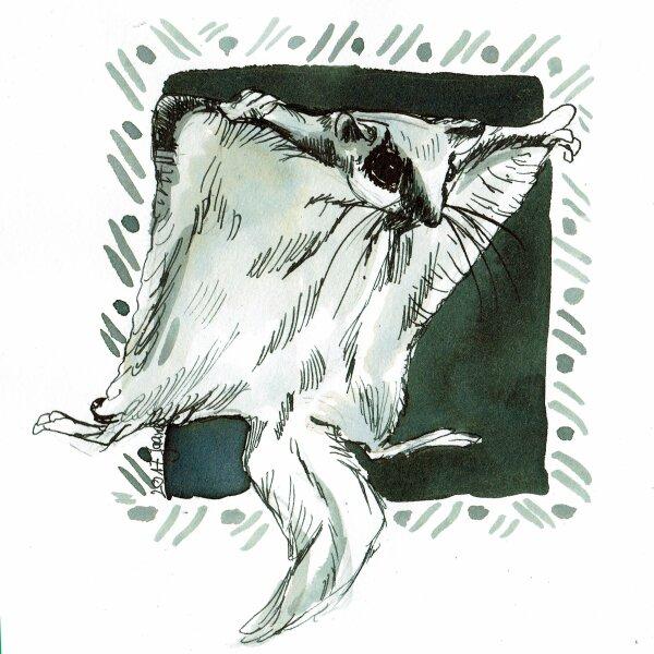 28-fall- Flughörnchen