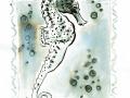 04-underwater- Seepferdchen