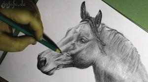 Horse portrait drawing grayscale with pencil A4