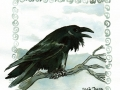 15-mysterious- Kolkrabe